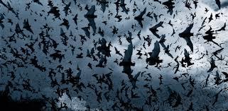 united bat control bat removal bat proofing pest removal 24 7