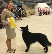 belgian sheepdog ohio sarron belgian sheepdogs home facebook