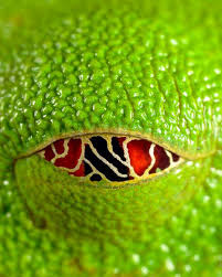 a green snake wallpapers 105 best reptiles images on pinterest nature reptiles and snakes