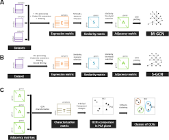 Adjacency Resume Construction And Comparison Of Gene Co Expression Networks Shows