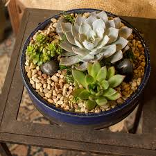 succulent arrangements planted table top succulent arrangements blumen gardens