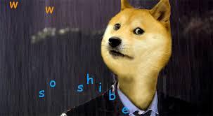 Doge Meme Tumblr - doctor doge tumblr