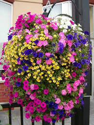 Hanging Plants For Patio 340 Best Plantas Y Flores Images On Pinterest Plants Patios And