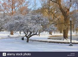 cherry tree in boston public garden after a snow storm boston
