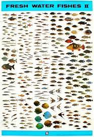the awesome list of freshwater aquarium fish 2017 aquascape ideas