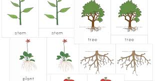 montessori tree printable the helpful garden montessori botany nomenclature set for primary 3