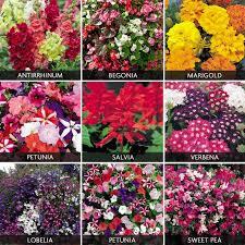 Plant Flower Garden - best 25 summer bedding plants ideas on pinterest perennials