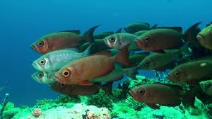 a flock of tropical fish on the reef in search of food