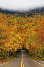 15 of the world u0027s most beautiful tree tunnels and how to get