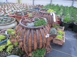 succulent planters for sale unique outdoor planters for your garden homesfeed