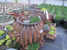 Succulent Pots For Sale Unique Outdoor Planters For Your Garden Homesfeed