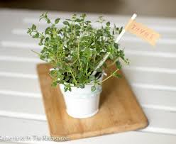 plant wedding favors 9 creative memorable diy wedding favors thegoodstuff
