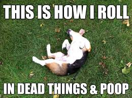 Dog Poop Meme - dead dog meme dog best of the funny meme