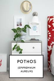 easy houseplants 4 indoor plants to green up your spaces modern