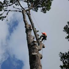 tree and stump removal auckland treesafe