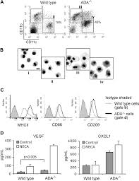 adenosine receptors in regulation of dendritic cell