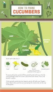 should you prune vegetable plants fix com