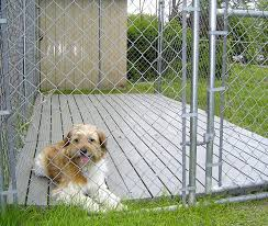 Best Flooring With Dogs Amazing Outdoor Kennel Flooring Options Flooring Designs