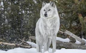 post grad problems back door cover arian vs wolf