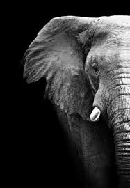 The Blind Men And The Elephant Lesson Plans Your Perception Is Not Reality In A Divorce