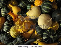 ornamental gourds stock photo royalty free image 75125045 alamy