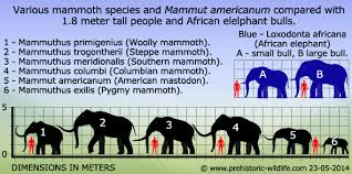 mammuthus primigenius woolly mammoth