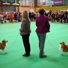 who won the dog show on thanksgiving bleacher report sports highlights news now