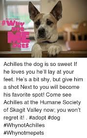 Pet Insurance Meme - pawsitive alliances ip with healthy paws pet insurance achilles the