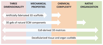 the evolution of three dimensional cell cultures towards unimpeded