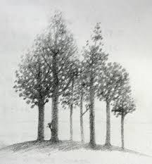 drawn forest drawing nature pencil and in color drawn forest