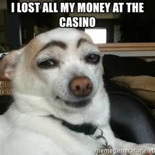 Lost Dog Meme - i lost all my money at the casino eyebrows dog meme generator