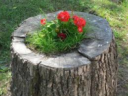interesting ideas how to decorate your garden with tree stumps