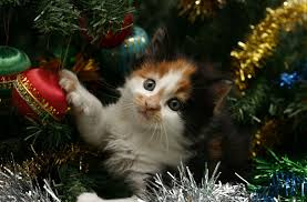 new year holiday christmas tree tinsel cat cat kitten new year cat
