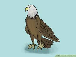 stellers sea eagle wallpapers drawn steller u0027s sea eagle step by step pencil and in color drawn