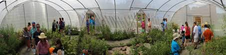 nj native plants butterfly house thewatershed org