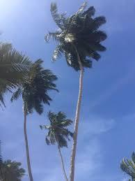 Hotel Flower Garden Unawatuna by Final Days In Sri Lanka Mirissa Unawatuna And Galle U2013 Julia U0027s