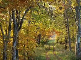 glen affric estate 5 autumn must do s in scotland embrace scotland