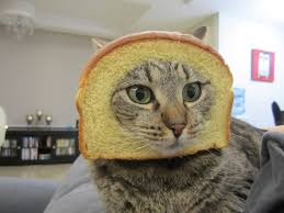 Cat In Bread Meme - gayle tales in bread meme