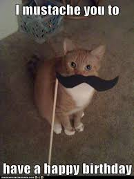 Mustache Cat Meme - i mustache you to have a happy birthday lolcats lol cat memes