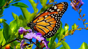 beautiful butterflies u0026 the best relaxing piano sleep relaxing