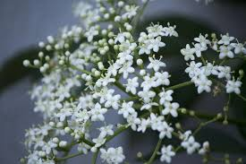small white flowers get free stock photo of white flowers online