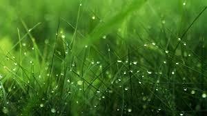 amazing grass wallpaper desktop images background photos download