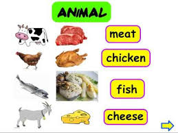 animal and plant origin food youtube