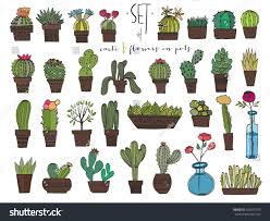cute hand drawn vector cacti pots stock vector 324591755