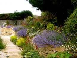 outdoor u0026 garden wonderful drought tolerant landscaping with
