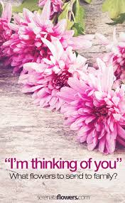 thinking of you flowers thinking of you flowers for family members pollennation