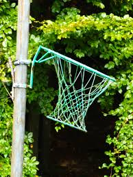 Backyard Basketball Hoops by Free Images Tree Nature Forest Grass Branch Sport Lawn
