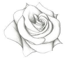 easy pencil drawing of rose 12 model easy pencil drawings of