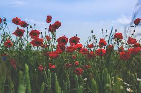 the story behind remembrance day le nurb
