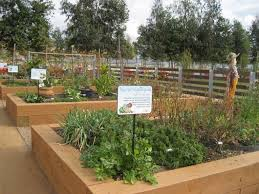 28 best community garden images on pinterest gardening potager